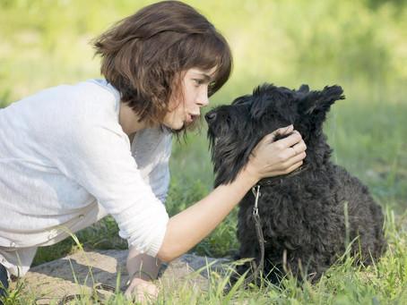 Seu cachorro entende (e gosta) quando você fala com ele como se fosse um bebê