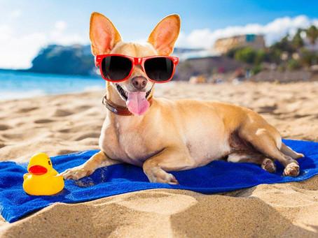Pretende levar seu cachorro na praia? Confira alguns cuidados importantes