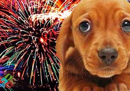 Os cães e os fogos de artifício