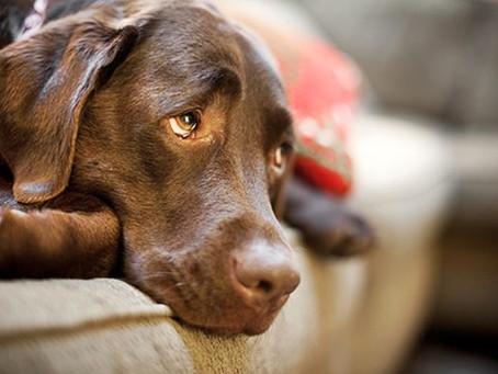 Depressão em animais domésticos: saiba quais os sintomas