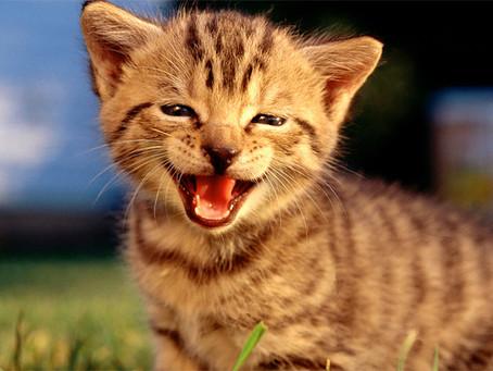 4 coisas que fazem um gato ser feliz