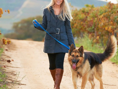 5 dicas para levar seu cão para passear com facilidade