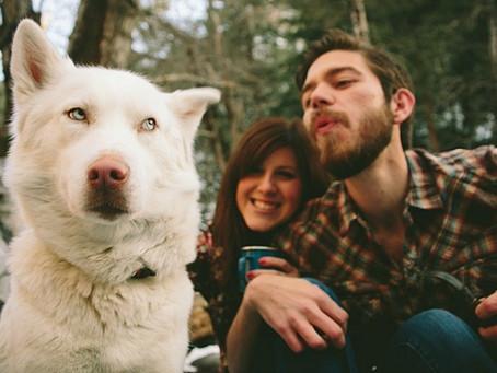 Confira lista com as raças de cachorros mais ciumentos