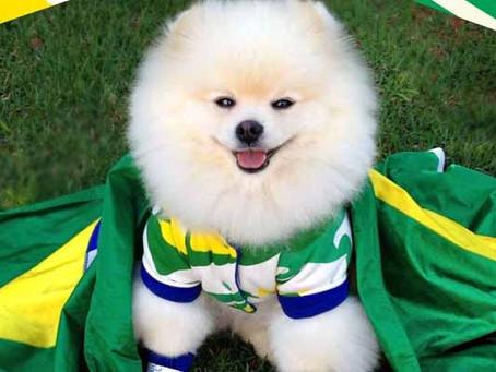Veja lista de cuidados com cães e gatos durante jogos da Copa