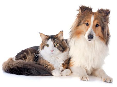 Os benefícios da castração para cães e gatos