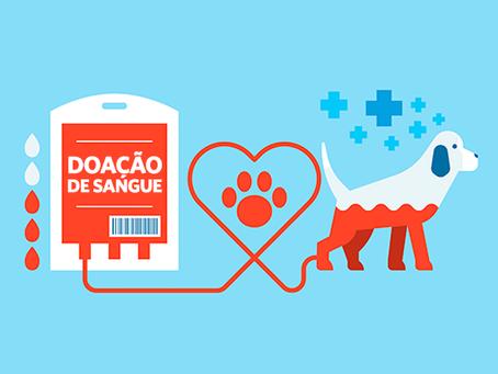 Você sabia que os pets também podem doar sangue?