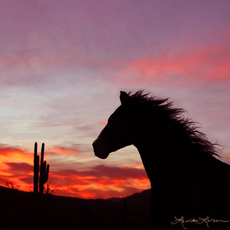 My horse at sunset by Laurie Larson