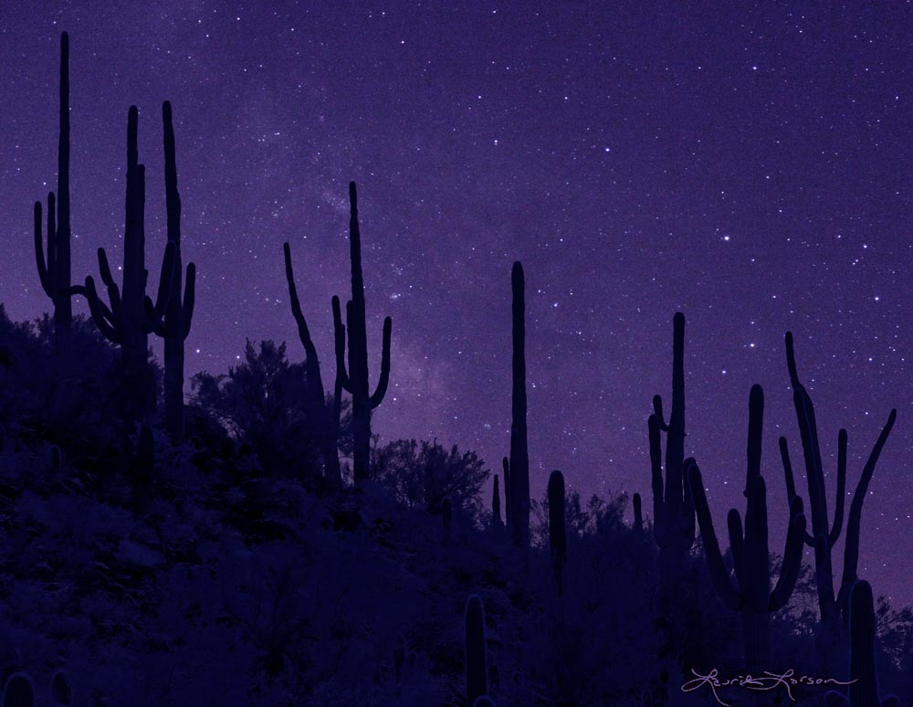 Marana nights - Photo by Laurie Larson