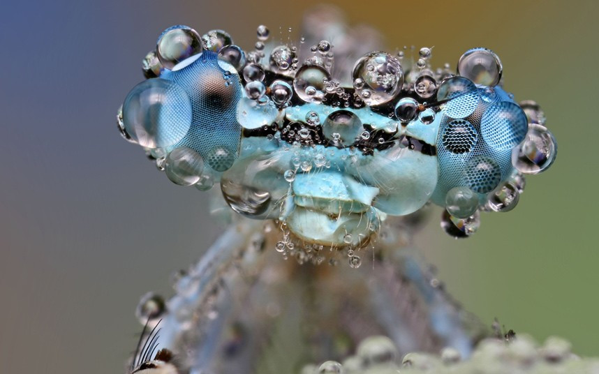 Dew-soaked bugs by Ondrej Pakan