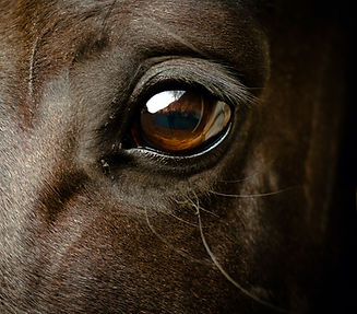 Eye%20of%20a%20black%20horse_edited.jpg
