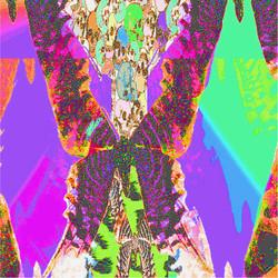 buttflyzcloser1.jpg