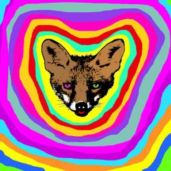 foxFace25x25.jpg