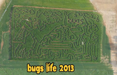 Bugs Life 2013