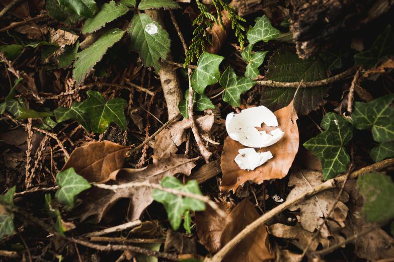 Newbold Forest School Y1-2-96 web.jpg