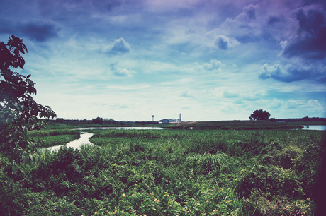 Grassland Blues