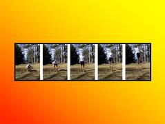 Slide20.jpg