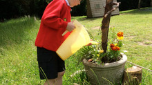 District Schools in Bloom 2016