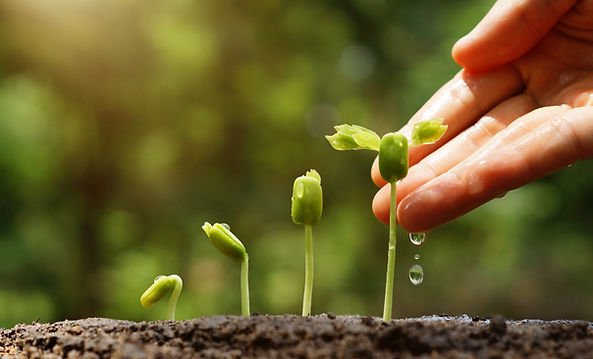 UnterPflanzenschutzversteht man sämtliche Maßnahmen zum Schutze der Kulturpflanzen gegen Krankheiten, Schädlinge sowie vor konkurrierenden Unkräutern und Gräsern,welcheauch denMenschen, seine Wohn-, Arbeits- und Lagerstätten befallen.