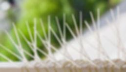 Eine Taubenplage ist nicht nur nervig, sondern kann auchgefährlich werden, da ihrKotBausubstanzen zerstört. Zudem übertragen sie eine Vielzahl von Krankheiten und Parasiten.  Dank unserer Taubenvergrämungsmaßnahmen befreien wir Gebäude von stark befallendem Taubenkot und beugen dem nächsten lästigen Kotbefall mit Spikes oder Taubennetzen vor.  
