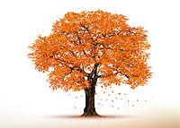 arbre-automne.jpg