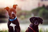 chiens-Communication -1.jpg