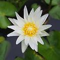 Lotus__Fotor.jpg