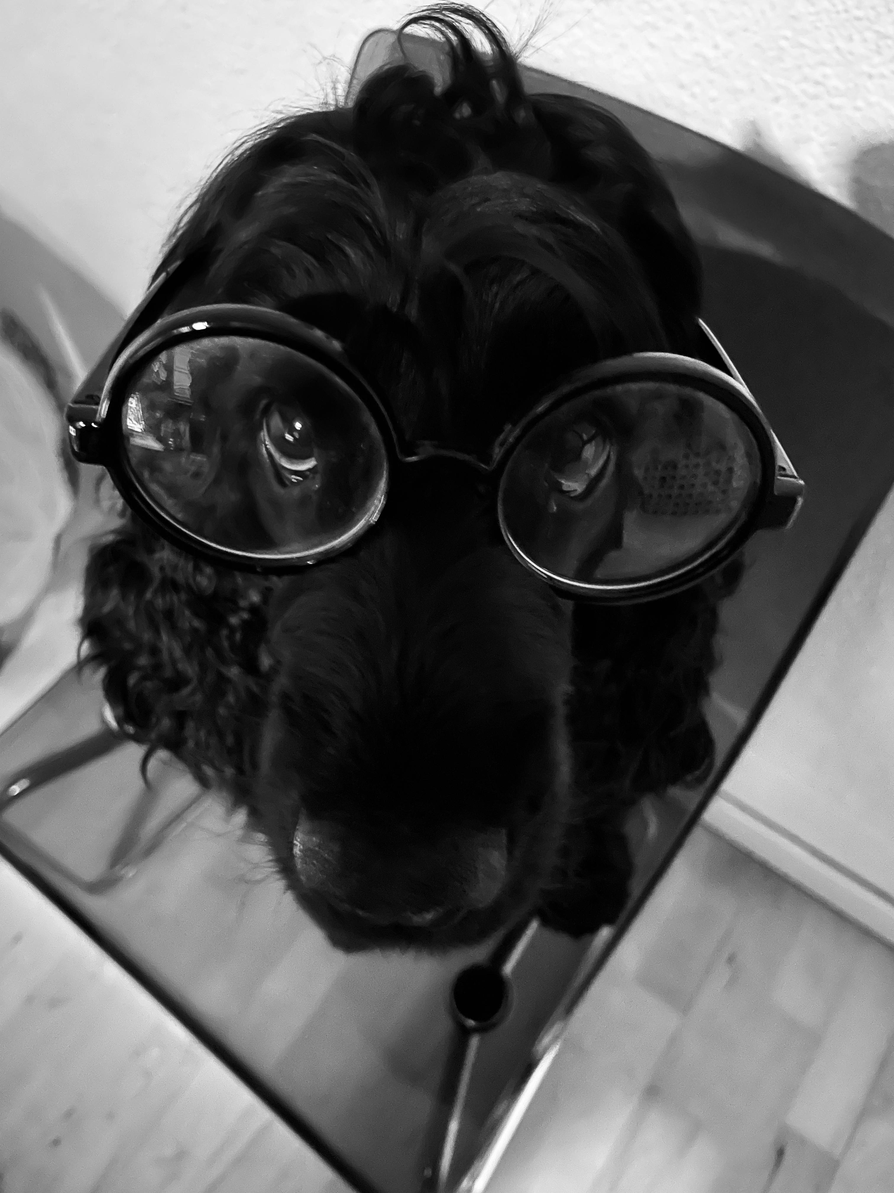 Online Hundeberatung