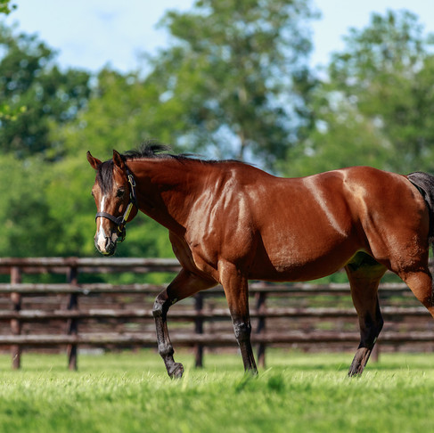 Two winners in a day for both Olympic Glory and Toronado