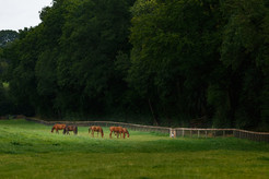 Mares on the paddock