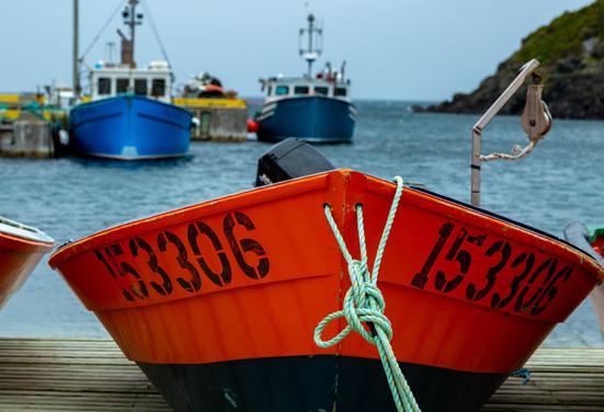 Lark Harbour II