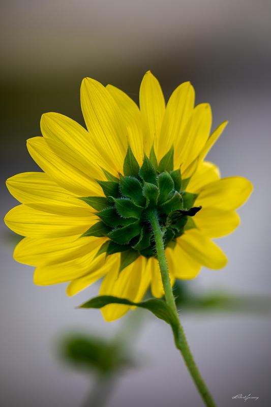 yellow-1-2