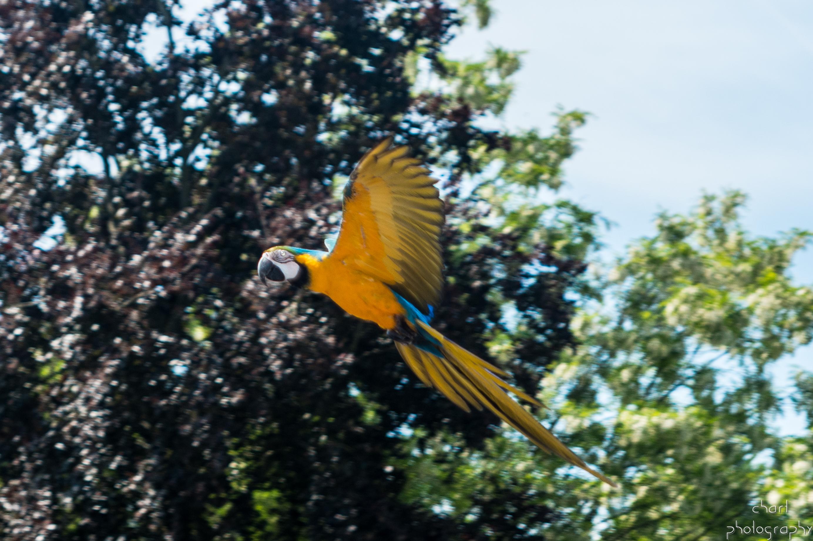 Parc des Oiseaux Chart Photography