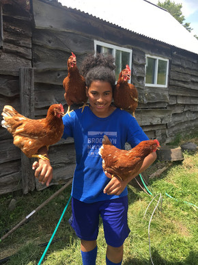 Boys | Chickens