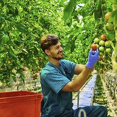 categorie_agroalimentaire.jpg