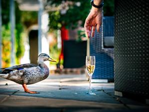 Duck Drink by Andrew Billington