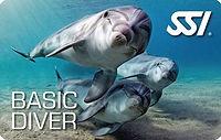 basic diver for website.jpg