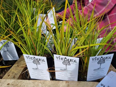 Plants for native habitats