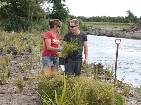From willows to whitebait - restoring wetlands to bring back wildlife