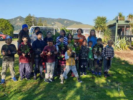 Maori-led kaitiakitanga to help Tairawhiti Ngutukaka - East Coast Kakabeak thrive