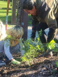 Planting Ngutukākā 2.jpg
