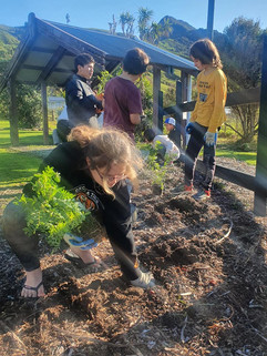 Planting Ngutukākā 3.jpg