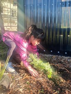 Tamariki planting Ngutukākā.jpg