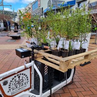 Gardenstar - Wellington (3).jpg