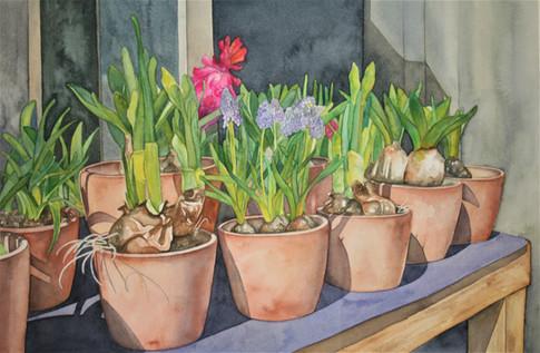 Blumen Von Liepiz