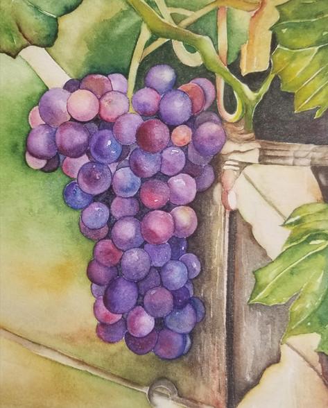 Grapes purple