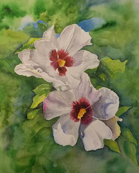 Hibiscus White