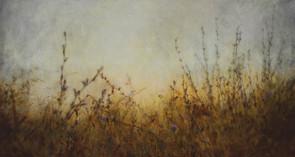 padded feet on misty meadows