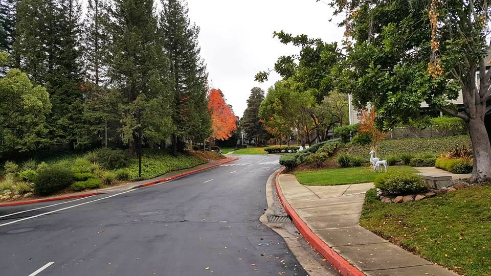 645 Canyon area1