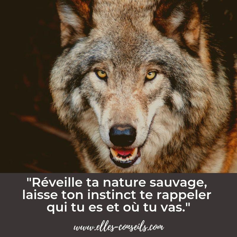 Le Loup Elles.Conseils Coaching holistique