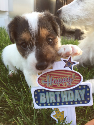 Happy Birthday »Charly«